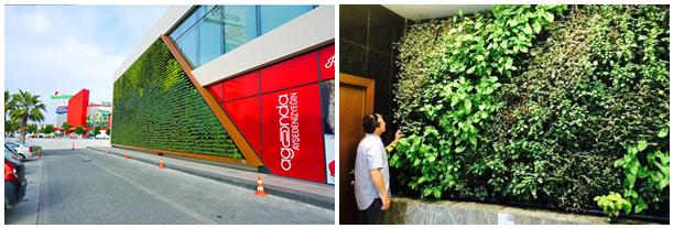 Green Wall Vertical Garden