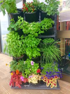 Vertical garden, grow your own vegetables