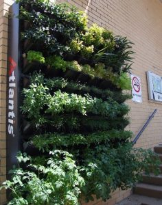vertical garden, grow wall