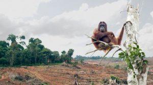 orangutans, reason to choose timber composite