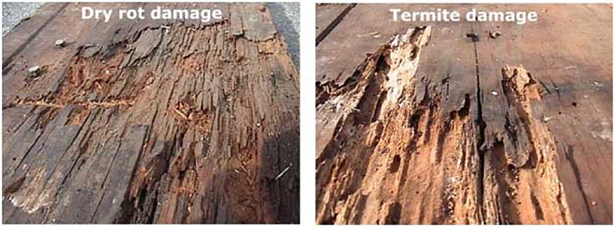 Composite-Decking-is-Termite-Proof