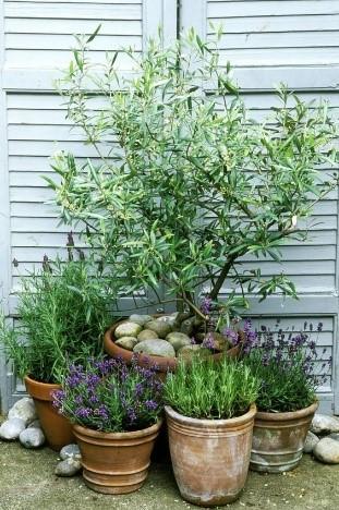garden renovation tips