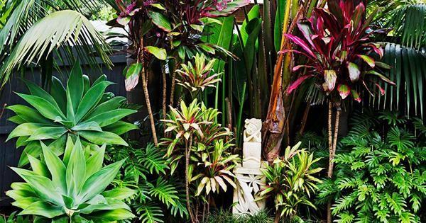 Garden Renovation Tips - Plant Selection